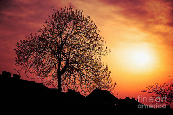 Photograph - Silhouette Of Tree by Yew Kwang