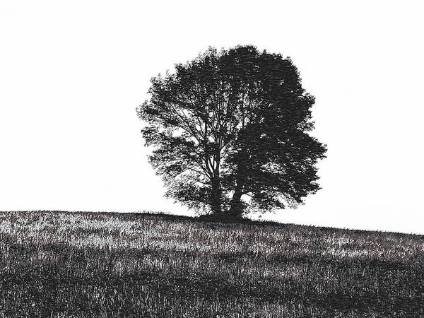 Photograph - Silhouette Summer Tree  by Richard Reeve