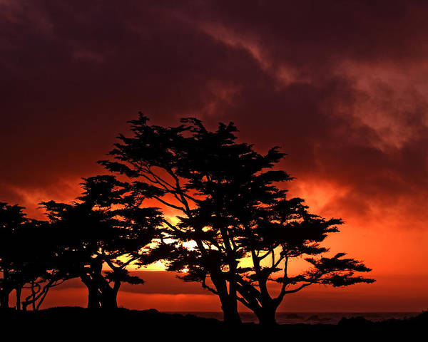 Monterey Cypress Photograph - Silhouetted Cypresses by Bill Gallagher