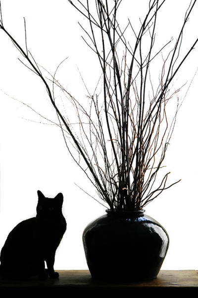 Wall Art - Photograph - Silhouetted Image Of A Cat By A Flower by Julien Mcroberts