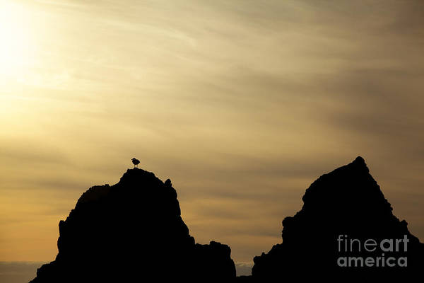 Photograph - Silhouetted Sea Gull by Charmian Vistaunet