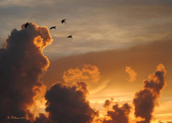 Photograph - Silhouettes Above The Clouds by Dan Williams