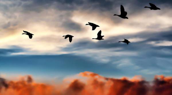 Bird In Flight Digital Art - Silhouettes by Jeff S PhotoArt