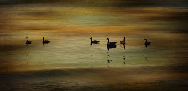 Photograph - Silhouettes by Marilyn Wilson