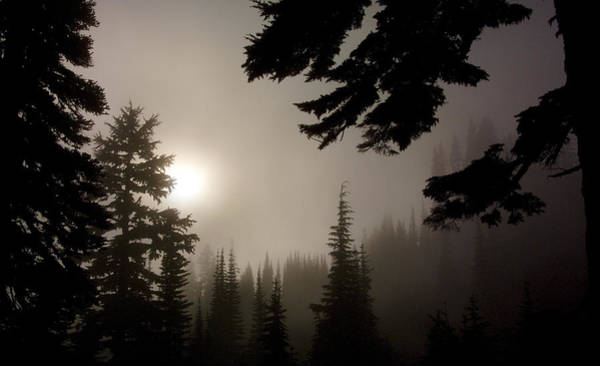 Photograph - Silhouettes Of Trees On Mt Rainier by Greg Reed