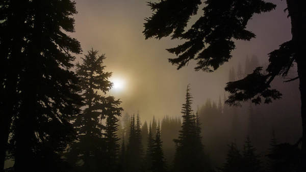Photograph - Silhouettes Of Trees On Mt Rainier II by Greg Reed