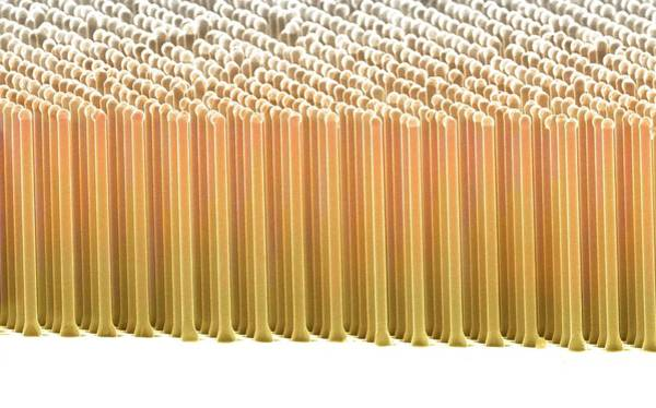 Eco-system Photograph - Silicon Nanorods by Prof. Nathan Lewis Et Al/science Photo Library