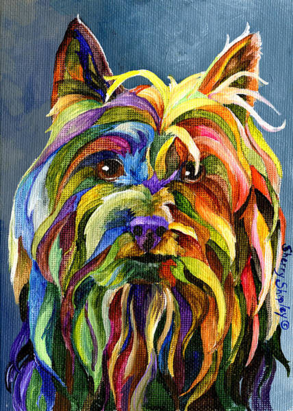 Painting - Silky Terrier by Sherry Shipley