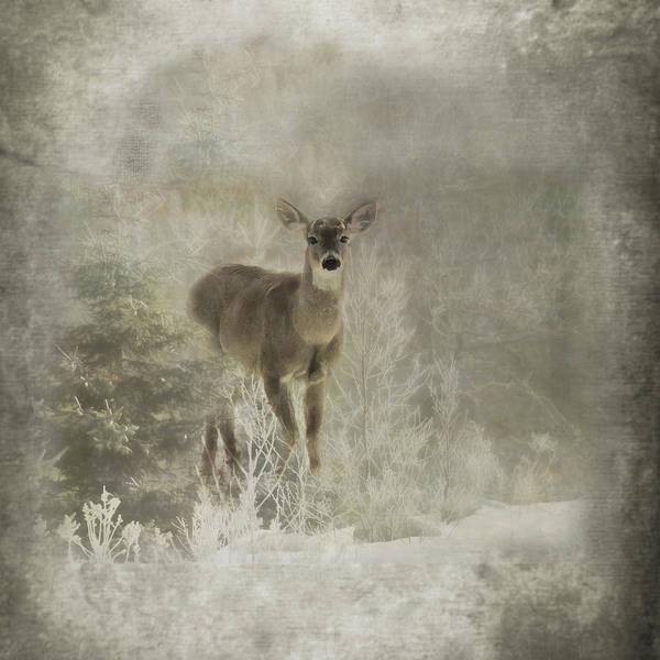 Doe Photograph - Sillent Watcher by Susan Capuano