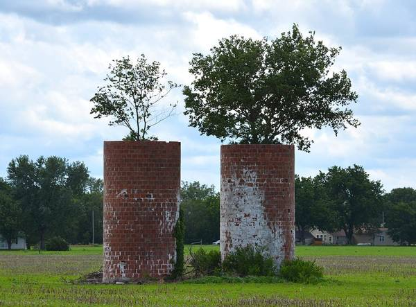 Photograph - Silo Trees by Keith Stokes