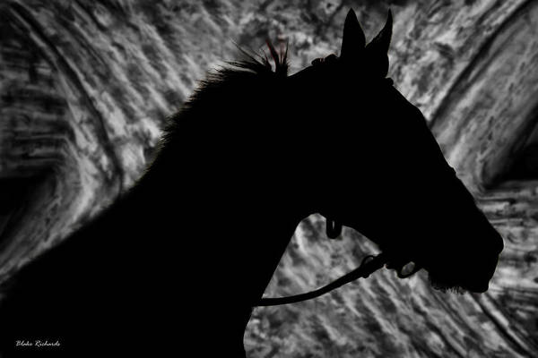 Photograph - Silouette Of A Stallion by Blake Richards