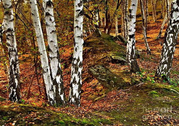 Photograph - Silver Birch Tree Canvas by Martyn Arnold