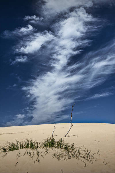 Photograph - Silver Lake Dune With Grass Dead Trees And Cirrus Clouds by Randall Nyhof