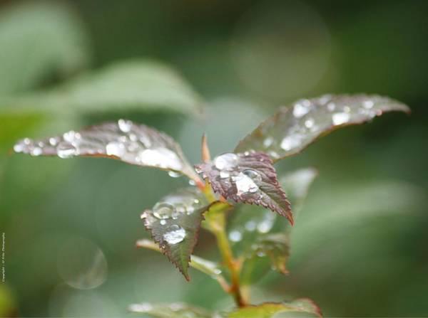 Photograph - Silver Rain by Al Fritz