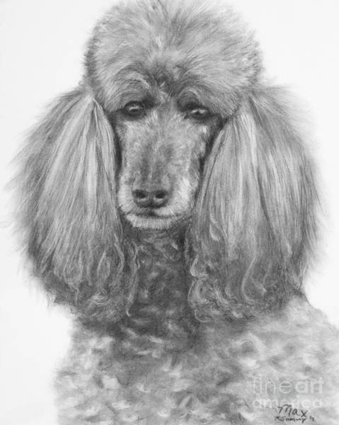 Art Print featuring the drawing Silver Standard Poodle Drawing by Kate Sumners
