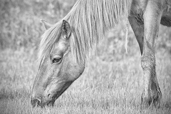 Photograph - Silver Tone Wild Horse by Bob Decker