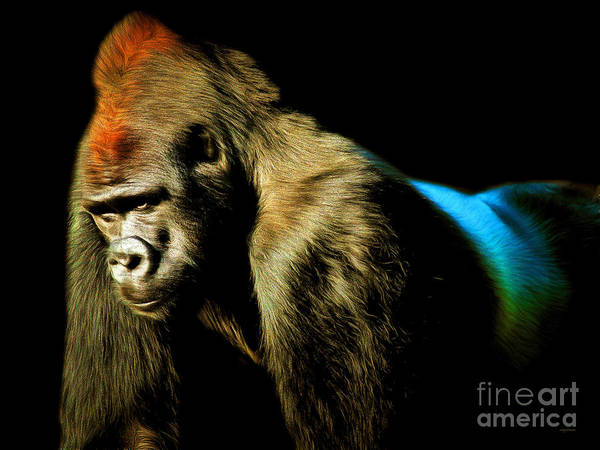 Photograph - Silverback 20150210brun by Wingsdomain Art and Photography