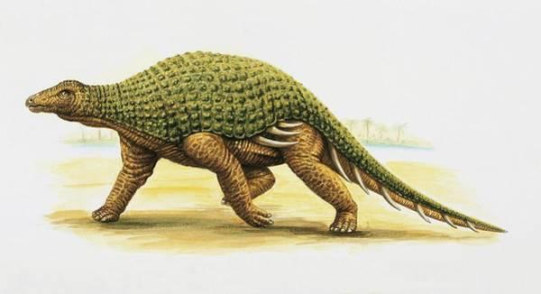 Cretaceous Wall Art - Photograph - Silvisaurus Dinosaur by Deagostini/uig/science Photo Library