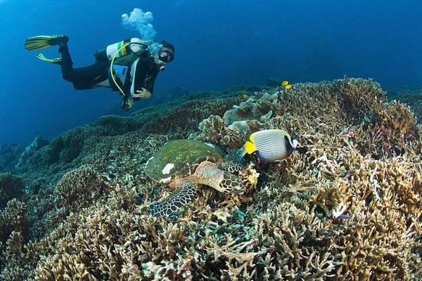 Free Dive Wall Art - Photograph - Similan Islands Thailand Scuba Diver by Stuart Westmorland