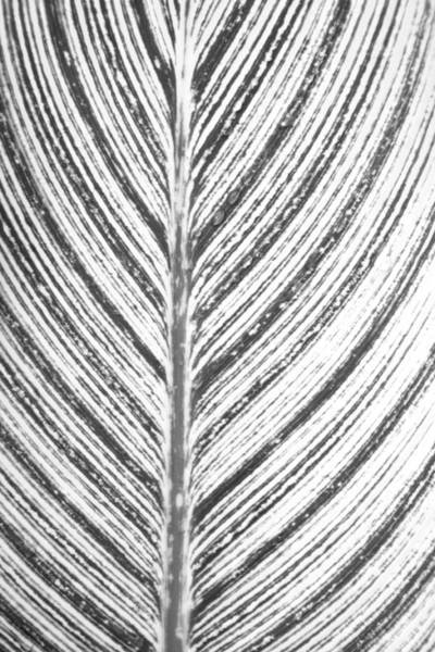 Photograph - Simple Stripes 2 by Marilyn Hunt