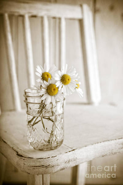 Photograph - Simple White Daisy Flowers by Edward Fielding