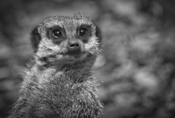 Photograph - Simples by Chris Boulton
