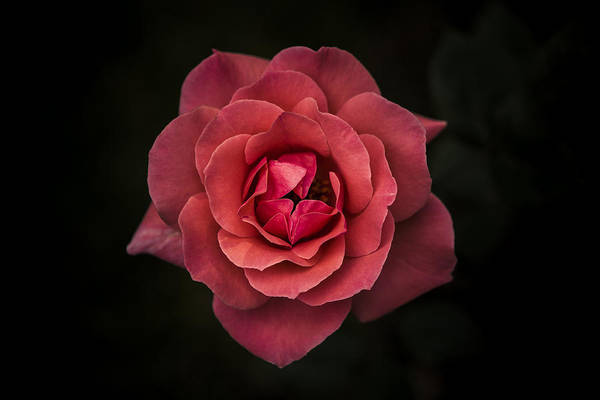 Red Flower Photograph - Simplicity Is Beauty by Rui Boino