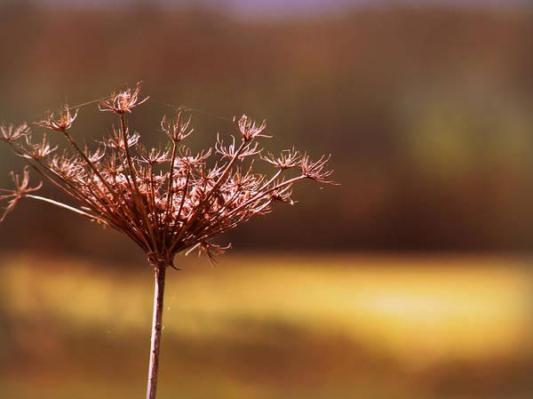 Photograph - Simplicity by Micki Findlay