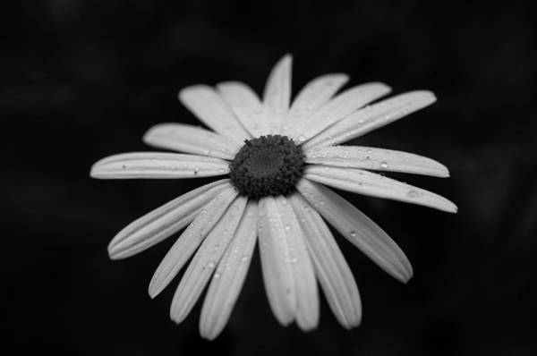 Photograph - Simplicity by Miguel Winterpacht
