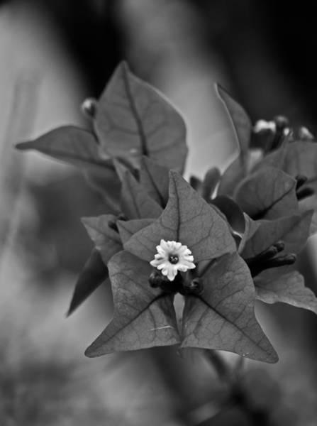 Photograph - Simplicity Pla 504 by G L Sarti