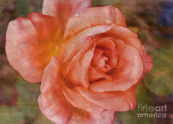 Photograph - Simply A Rose by Deborah Benoit