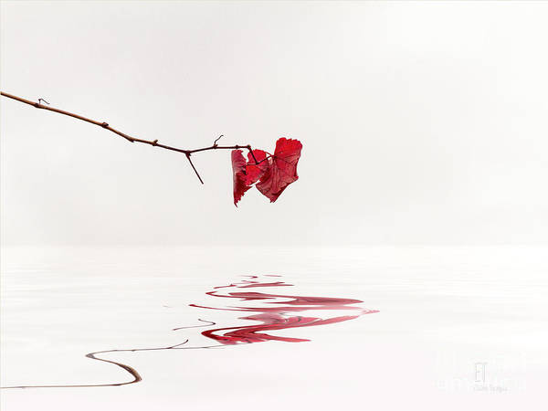 Photograph - Simply Leaves by Elaine Teague
