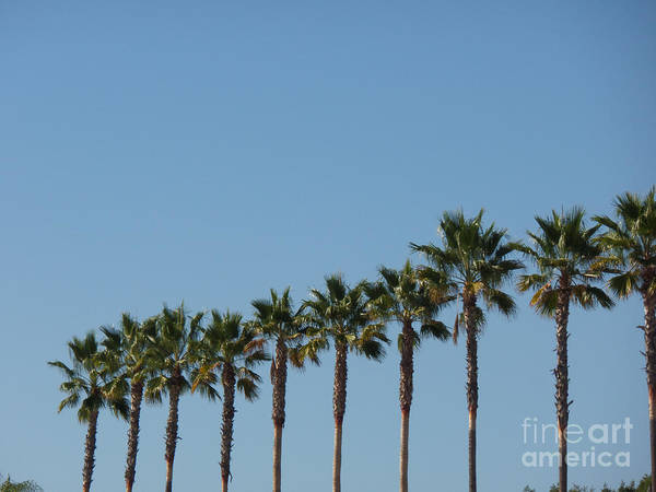 Simply Palms Art Print
