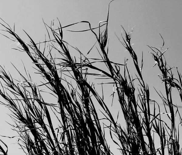 Photograph - Simply Straw by Candice Trimble