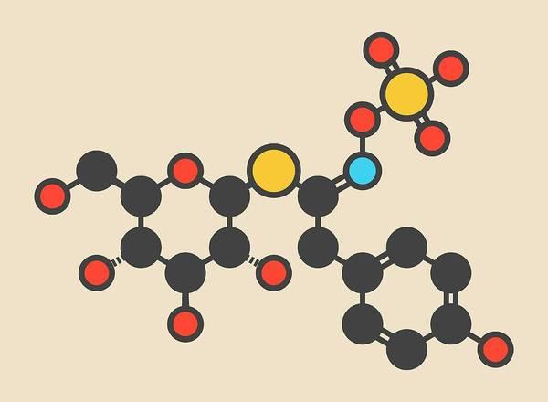Pungent Photograph - Sinalbin Glucosinolate Molecule by Molekuul/science Photo Library