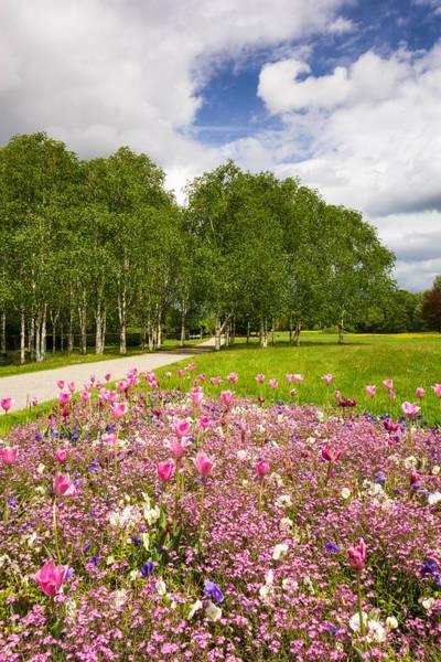 Photograph - Sindelfingen Germany Sommerhofenpark In Spring by Matthias Hauser
