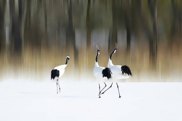 Pair Photograph - Sing A Song Of Love by Ikuo Iga