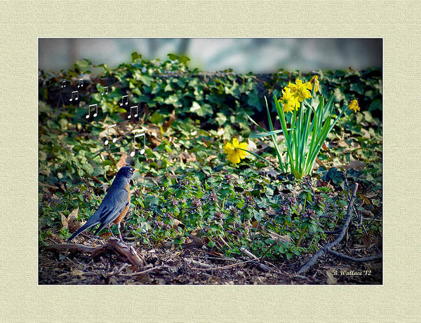 Wall Art - Photograph - Sing To The Flowers by Brian Wallace
