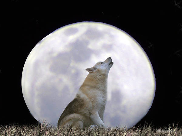 Howling Photograph - Singing Moon by Stephanie Laird