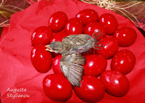 Photograph - Singing Over Red Eggs by Augusta Stylianou