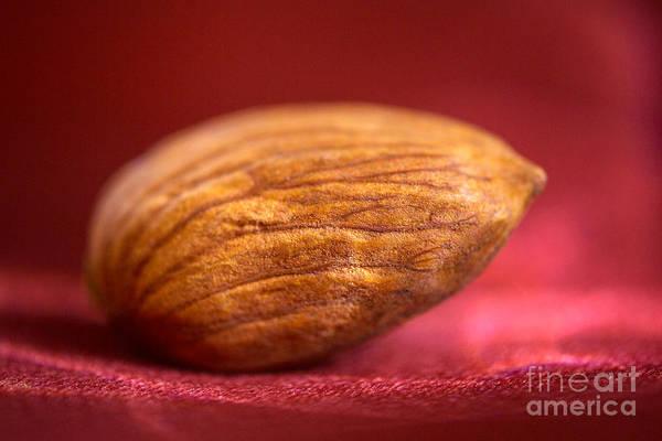 Wall Art - Photograph - Single Almond On Red by Iris Richardson