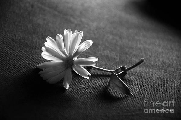 Photograph - Single Calendula by Randi Grace Nilsberg