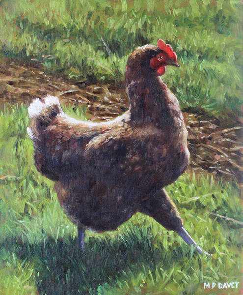 Painting - Single Chicken Walking Around On Grass by Martin Davey