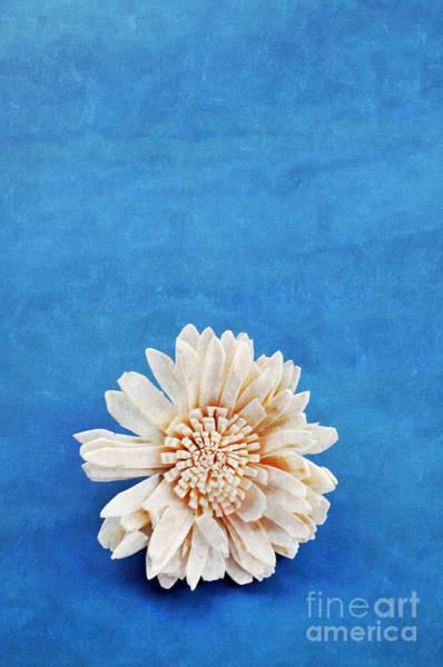 Photograph - Single Flower by David Lichtneker