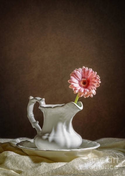 Single Mother Wall Art - Photograph - Single Gerbera Flower by Amanda Elwell