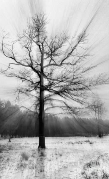 Photograph - Single Leafless Tree In Winter Forest by Iryna Liveoak