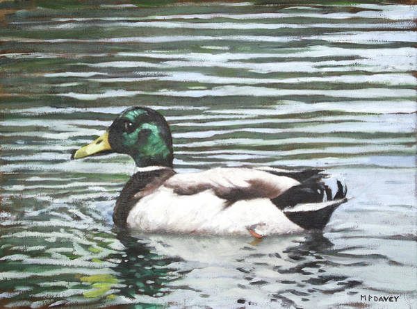 Painting - Single Mallard Duck In Water by Martin Davey