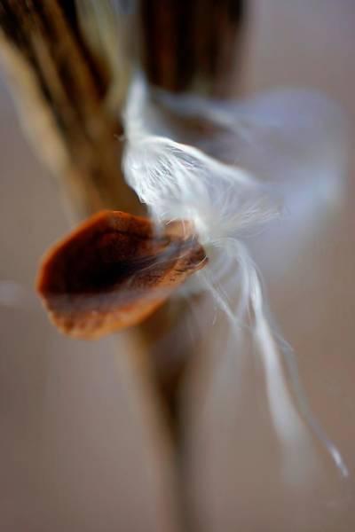 Photograph - Single Seed Emerging by Beth Akerman