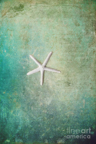 Wall Art - Photograph - Single Starfish by Sylvia Cook