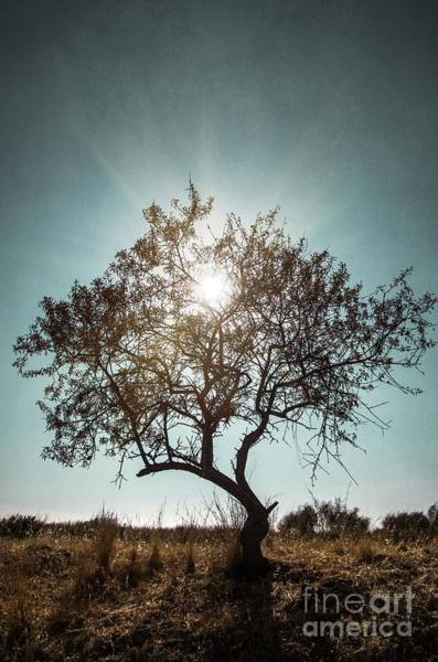 Bright Photograph - Single Tree by Carlos Caetano